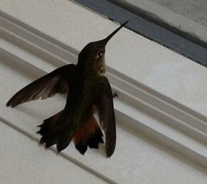 Hummingbird photo